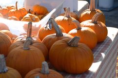 Pumpkins for sale on a table. Small and large orange pumpkins for sale at a farmers market for Halloween Royalty Free Stock Image