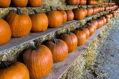Pumpkins sale for Thanksgiving day. Upstate New York at the farm Stock Photos