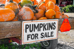 Pumpkins for Sale. Trailer load of pumpkins freshly picked from field on farm trailer with Pumpkins for Sale sign stock image