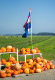Pumpkins for sale under a flag. Flevoland, the Netherlands - October 2, 2011: pumpkins for sale in the countryside Royalty Free Stock Images
