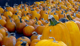 Pumpkins for sale Stock Images