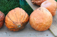 Pumpkins for sale. Pumpkins on wooden benches for autumn sale Royalty Free Stock Photo