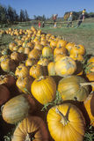 Pumpkins and scarecrows in VT Royalty Free Stock Image