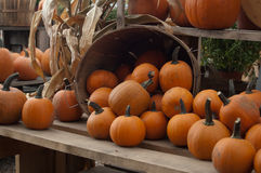 Pumpkins on shelf stock image