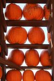 Pumpkins on Shelves in Abstract Design on White Background Royalty Free Stock Image