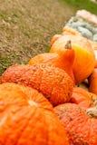 Pumpkins showing diversity Stock Image