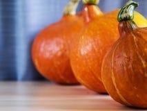 Pumpkins on the side. Color pumpkins on the side, hokaido Stock Photography