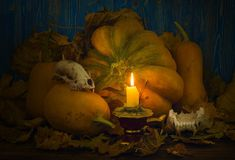 Pumpkins and skulls of animals lit candle Stock Photography