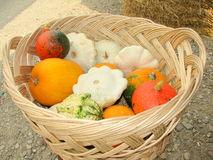 Pumpkins. Small Pumpkins in a basket for sale in Romania Stock Photography