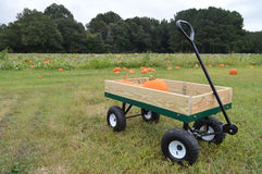 Pumpkins in a small hand cart  Stock Photography
