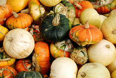 Pumpkins and Sqaush. Large selection of autumn pumpkins and squash, green white orange, large and small.  Taken at a pumpkin patch Stock Images