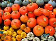 Pumpkins and squash. A wide variety of pumpkins and squash at a farmstand in Vermont Stock Photos