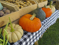Pumpkins and Squash Stock Photography