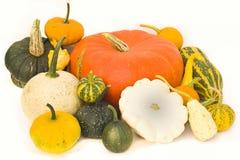 Pumpkins squash. Different pumpkins and squash on a table Stock Photo