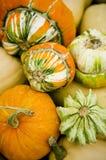 Pumpkins and Squash. Close up of organic pumpkins and squash at an outdoor market stock photography