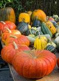 Pumpkins squash  Stock Photo