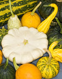 Pumpkins squash Royalty Free Stock Images