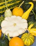 Pumpkins squash Royalty Free Stock Images