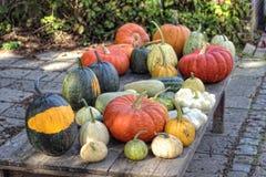 Pumpkins squash Royalty Free Stock Image