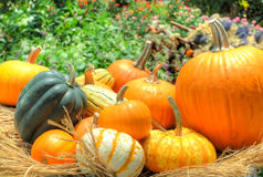 Pumpkins and squash stock image