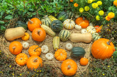 Pumpkins and squash Royalty Free Stock Image