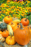 Pumpkins and squash stock images