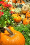Pumpkins and squash Stock Photos