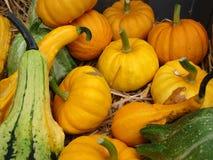 Pumpkins and squash Stock Photography