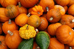 Pumpkins and squash Royalty Free Stock Photos
