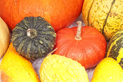 Pumpkins squash background Stock Images