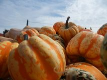 Pumpkins and squash. Close up of pumpkins and squash on display in outdoor market royalty free stock photos