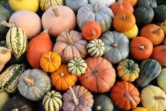Pumpkins and squash. stock photos