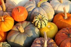 Pumpkins and squash royalty free stock photo
