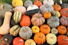 Pumpkins and squash. royalty free stock photos