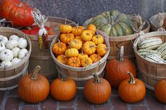 Pumpkins, squash and colorful fall vegetables. In baskets for sale Royalty Free Stock Photo