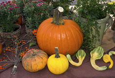 Pumpkins and squash Royalty Free Stock Images