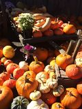 Pumpkins, squash & flowers display. Lavish display of pumpkins, pretty potted plants and various shapes and sizes of squash piled on an antique trailer and Stock Image