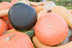 Pumpkins,squash and gourd harvest Stock Photography
