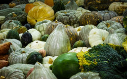 Pumpkins, squash and gourds harvest. Large variety of pumpkins, squash and gourds at harvest festival Stock Photo
