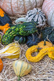 Pumpkins squash and gourds Stock Photography