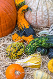 Pumpkins squash and gourds. Images of pumpkins, squash and gourds on farms during the fall harvest season royalty free stock photography