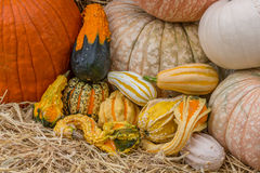 Pumpkins squash and gourds. Images of pumpkins, squash and gourds on farms during the fall harvest season royalty free stock image
