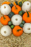 Pumpkins squash and gourds Stock Image