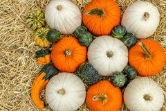 Pumpkins squash and gourds Royalty Free Stock Photography