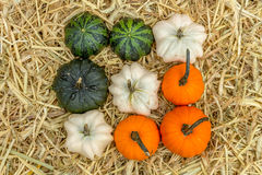 Pumpkins squash and gourds Stock Images