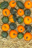 Pumpkins squash and gourds Royalty Free Stock Photo