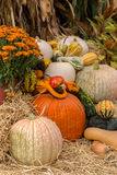 Pumpkins squash and gourds. Images of pumpkins, squash and gourds on farms during the fall harvest season stock image