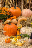 Pumpkins squash and gourds Stock Photos