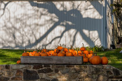 Pumpkins squash and gourds. Images of pumpkins, squash and gourds on farms during the fall harvest season royalty free stock photo