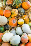 Pumpkins and squash Stock Photo
